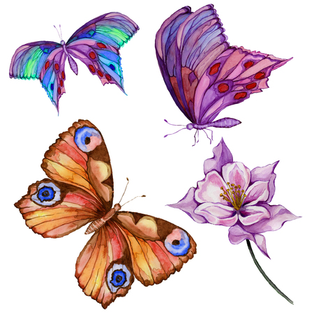 Watercolor painting set. Three bright beautiful butterflies, colombine flower on a stem. Isolated on white background. Hand drawn and painted natural illustration. Stock Photo