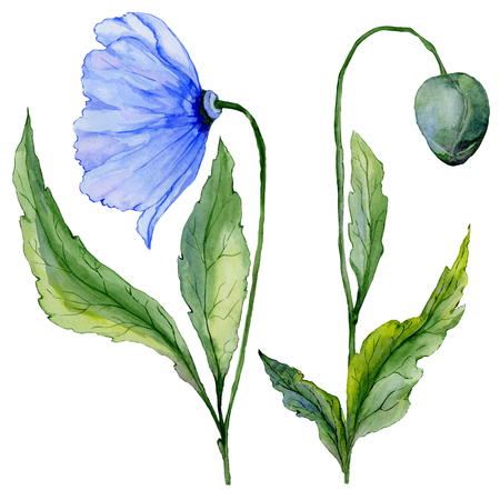 Beautiful blue poppy flower. Set - large meconopsis flower and stem with a bud isolated on white background. Side view. Watercolor painting. Hand painted floral illustration.