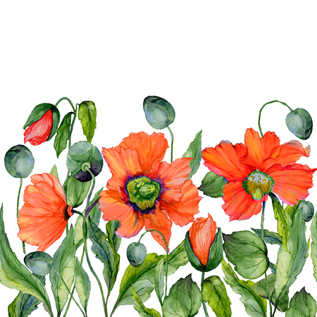 Vivid summer or spring background. Beautiful red poppy flowers on white background. Square shape. Seamless floral pattern. Watercolor painting. Hand painted illustration.