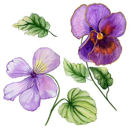 Beautiful botanic set (vivid purple viola flowers and leaves). Colorful violet flower and green leaves isolated on white background. Watercolor painting. Hand painted floral illustration.