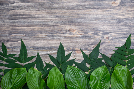 Dark old wooden background with beautiful fresh leaves arranged in a row. Vintage mockup. Top view. Flat lay. Border design.