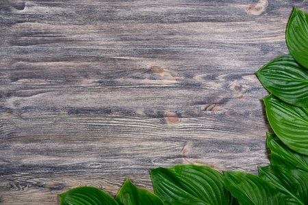 Dark old wooden background with beautiful fresh hosta leaves arranged in a corner. Vintage mockup.  Angle border design. Top view. Flat lay.
