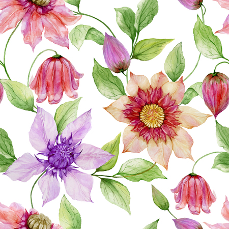 Beautiful clematis flowers on climbing twigs against white background. Seamless floral pattern. Watercolor painting. Hand painted illustration. Fabric, wallpaper design.