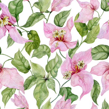 Beautiful bougainvillea flowers on climbing twigs on white background. Seamless floral pattern. Watercolor painting. Hand painted illustration. Fabric, wallpaper, wrapping paper design.