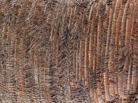 Fragment of palm trunk with beautiful brown bark. Close up photo. Natural texture, background.