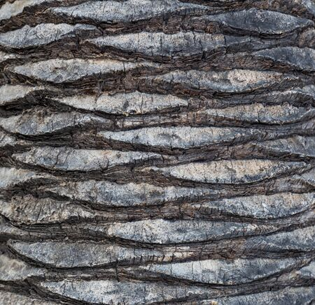 Fragment of palm trunk with beautiful gray and brown bark. Close up photo. Natural texture, background.