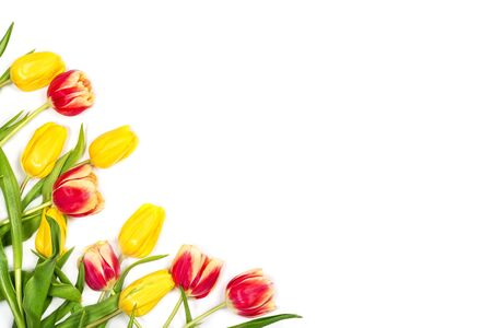 Beautiful spring floral mockup. Red and yellow tulips on white background. Space for your text. Top view. Flat lay. Can be used as a greeting card.