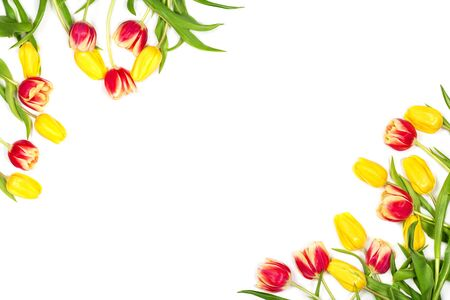 Spring mockup. Beautiful red and yellow tulips on white background. Space for your text. Top view. Flat lay. Can be used as a greeting card.