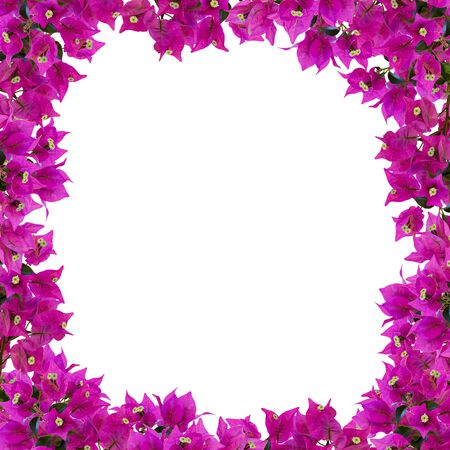 Square floral frame. Beautiful bougainvillia flowers isolated on white background. Space for your text. Top view. Flat lay. Can be used as a greeting card, template.