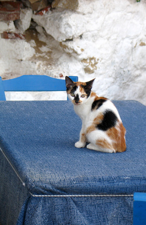 Cat playing on blue table in the local empty taverna in Crete, Greece photo