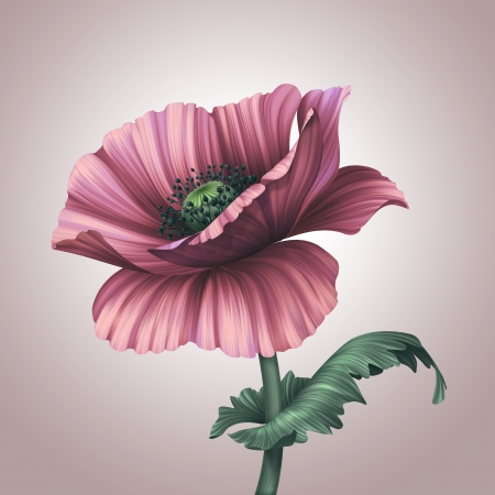 poppy leaf: beautiful pink poppy flower with leaf Stock Photo