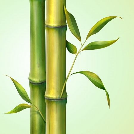 shoots: bamboo stem and leaves illustration