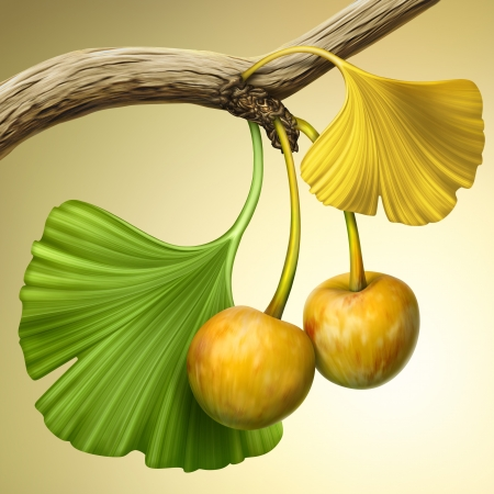 oriental medicine: illustration of ginkgo tree branch with fruits