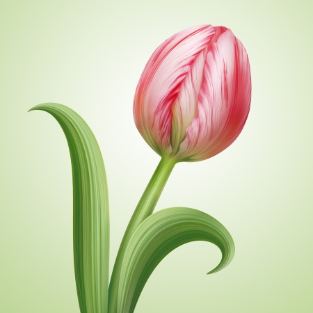 with pink tulip flower illustration