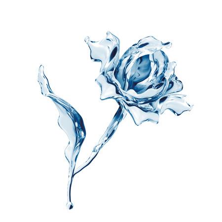 water rose flower isolated on white background, liquid splashing design element photo