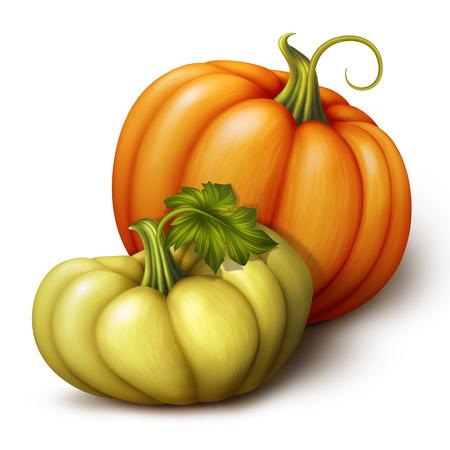 autumn orange and yellow pumpkins, seasonal vegetables illustration isolated on white background illustration