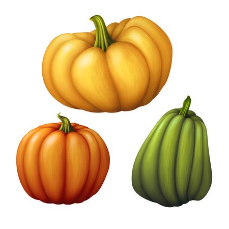 assorted shapes pumpkins illustration, vegetables isolated on white background illustration