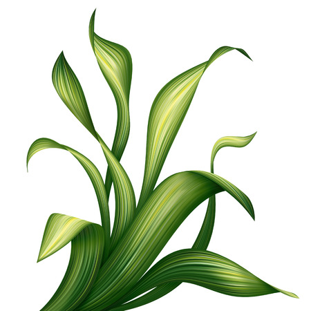 tropical garden: creative foliage, illustration of green grass and leaves isolated on white background
