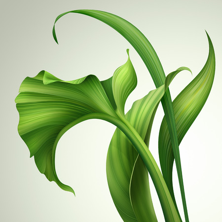 creative foliage, illustration of green leaves isolated