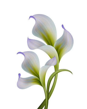 iris flower: abstract flowers illustration isolated on white background