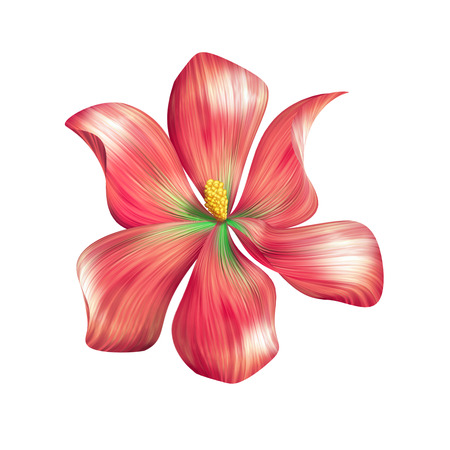 abstract red flower illustration isolated on white