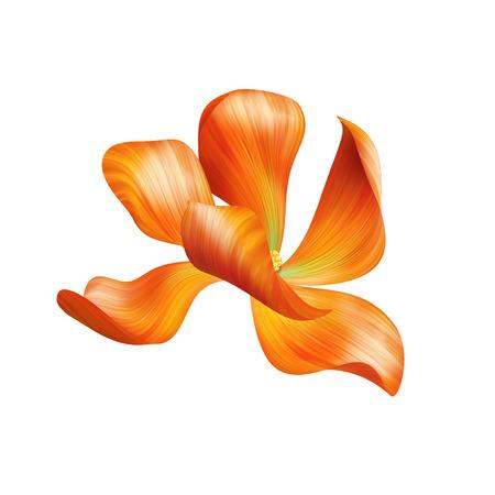 abstract delicate orange flower illustration isolated illustration