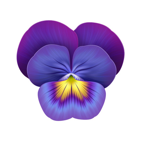 abstract viola pansy flower illustration isolated icon