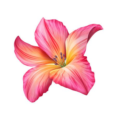 白で隔離される抽象的なピンクの花イラスト 写真素材