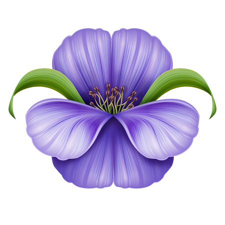 violet flower: abstract violet flower illustration isolated on white