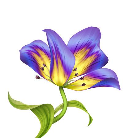abstract beautiful flower illustration isolated on white illustration