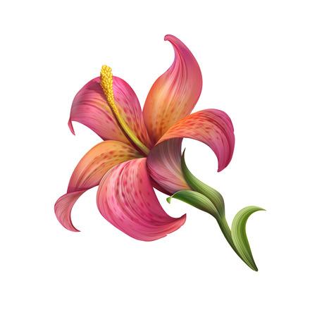 白で隔離される抽象的な赤いユリの花イラスト 写真素材