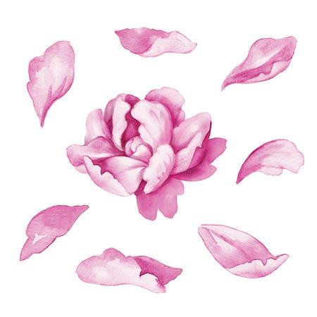 flower petal elements, watercolor illustration isolated on white illustration