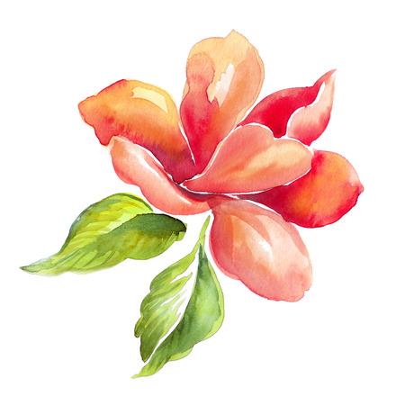 flor roja, hojas verdes, ejemplo de la acuarela aislado en blanco