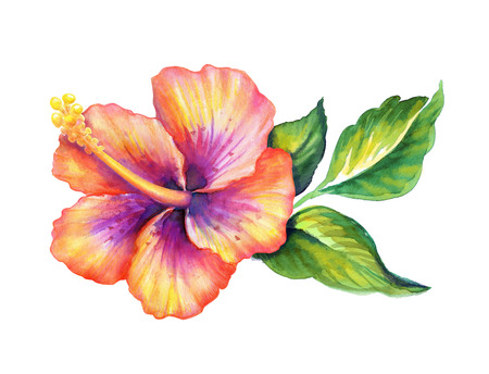 retro art: hibiscus flowerl watercolor illustration isolated on white Stock Photo