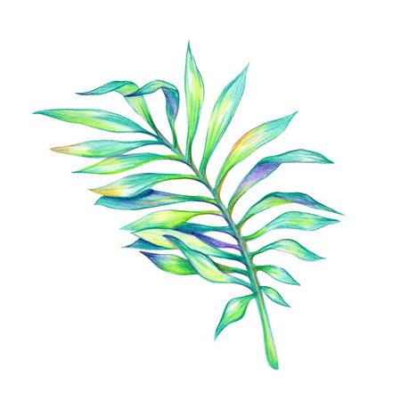 抽象的な熱帯のヤシの緑葉、白い背景で隔離水彩イラスト