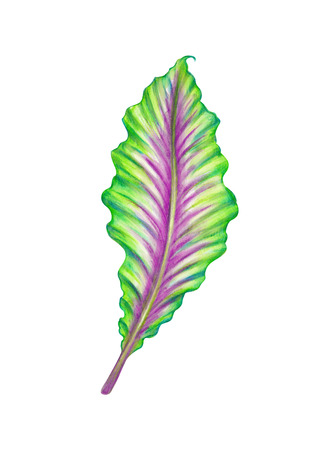 abstract tropical green leaf, watercolor illustration isolated on white illustration