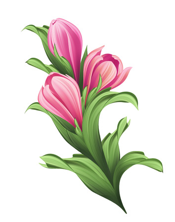 womanish: bunch of flowers pink tulip buds and green leaves illustration isolated on white background