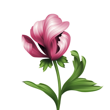 pink peony flower and green curly leaves illustration isolated on white background Stock Photo
