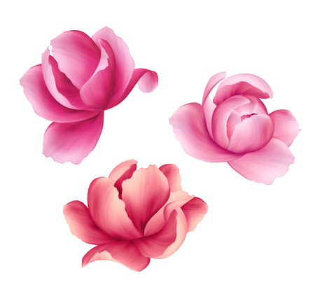 close: digital illustration, pink flowers set, peony blossom, design elements, isolated on white background