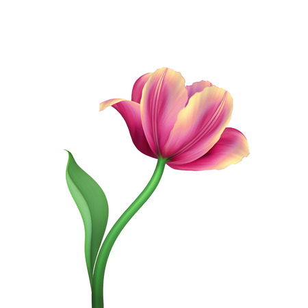 red rose: digital illustration, pink tulip isolated on white background