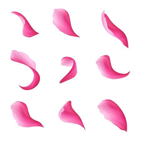 흰색 배경에 디지털 그림, 핑크 곱슬 꽃잎 구색, 디자인 요소, 격리