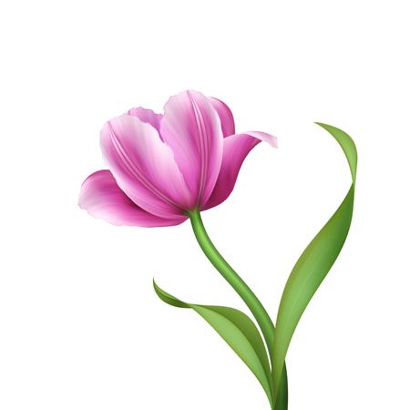 digital illustration, pink tulip isolated on white background
