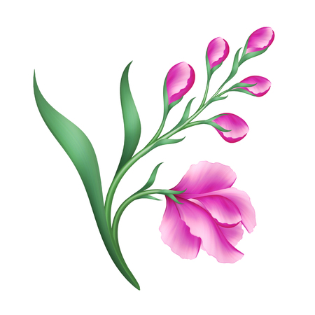 white flowers: digital illustration, pink flowers design element, isolated on white background