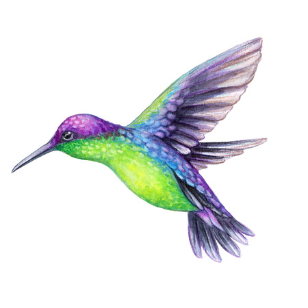 watercolor illustration, flying hummingbird isolated on white background, exotic, tropical, wild life clip art Banco de Imagens - 77079835