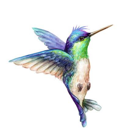 Ilustración de acuarela, volando colibrí aislado en fondo blanco, exótico, tropical, salvaje vida clip art Foto de archivo - 77079836