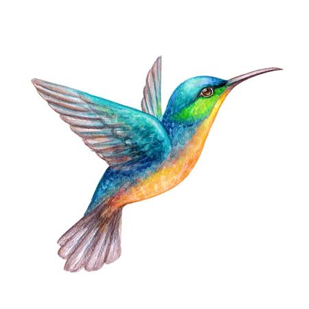 Aquarel illustratie, vliegende kolibrie geïsoleerd op witte achtergrond, exotische, tropische, wilde leven clip art