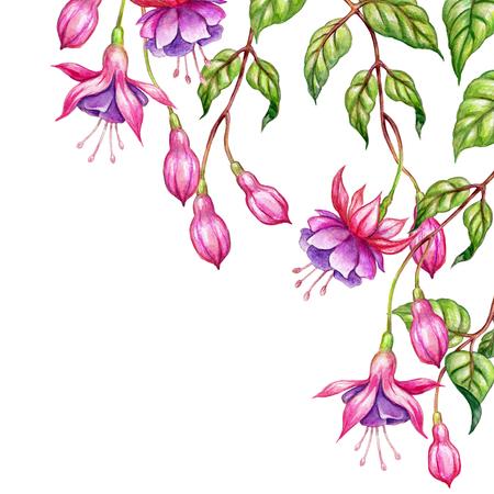 Aquarell floral botanischen Illustration, grüne Blätter, wilde Garten rosa Fuchsia Blumen, isoliert auf weißem Hintergrund Standard-Bild