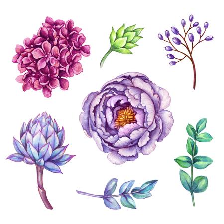 水彩イラスト花クリップ アート セット、野生の花のコレクション、ブーケ デザイン要素、白い背景で隔離 写真素材