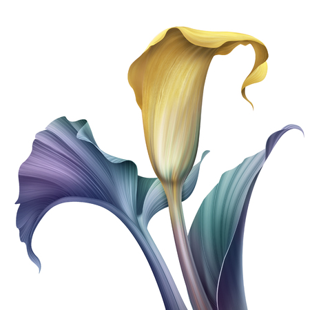 추상 열 대 꽃, 식물 그림, 장식 칼라 릴리, 흰색 배경에 고립 된 클립 아트 요소 스톡 콘텐츠