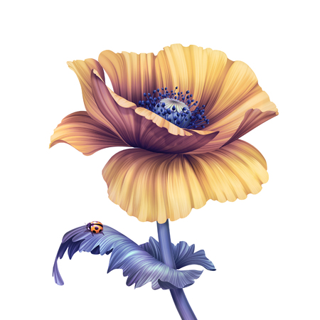 abstract flower, botanical illustration, decorative poppy, scroll leaves, clip art element isolated on white background